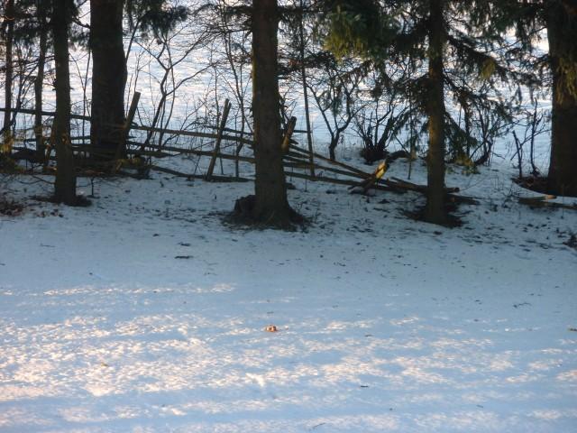 Här ligger dom och trycker vid trädet