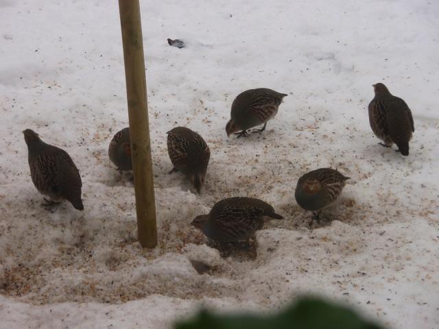 Här är dom vid fågelhuset och käkarVist är dom fina!