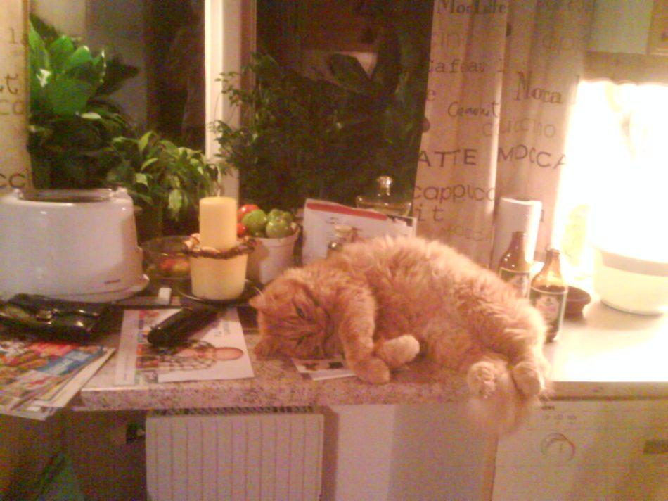 Gustav på bänken, där han inte får vara ;-)