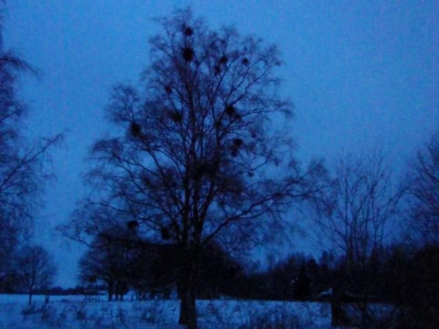 Häftigt träd